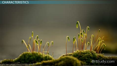 bryophytes definition types characteristics examples