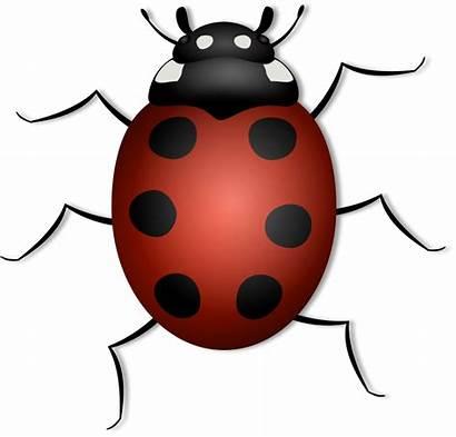 Bug June Clip Clipart