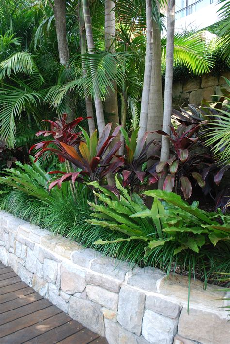 tropical landscaping trees notice the layering of plants in this bed imagine a few grey trunked palms rising out of your