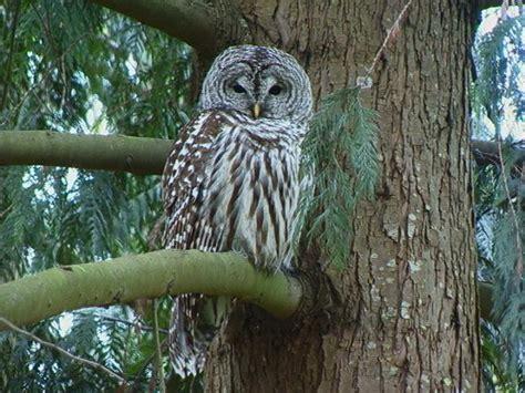 the birding nerd owling in central pennsylvania