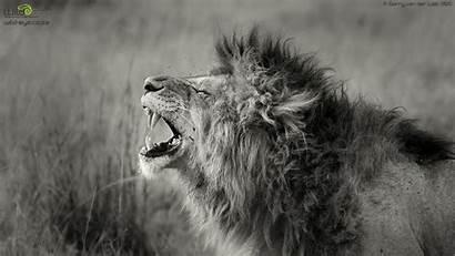 Wildlife Wallpapers Desktop Backgrounds Wild African Screensavers