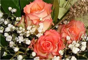 Bilder Von Blumenstrauß : bunter blumenstrauss foto bild pflanzen pilze flechten bl ten kleinpflanzen rosen ~ Buech-reservation.com Haus und Dekorationen