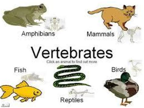 classifying plants  animals flashcards easy notecards