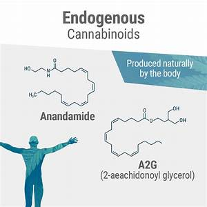A Complete Guide To The Endocannabinoid System