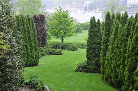 image result  parrotia persica vanessa landscaping