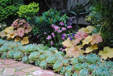 succulent flower bed 15 delightful succulent gardens that will inspire you page 2 of 2