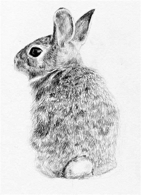 Rabbit Drawing Rabbit Drawing By Anna Shell