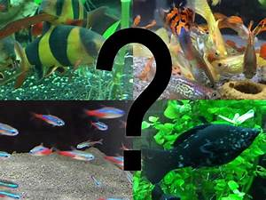 Fische Aquarium Hamburg : pin aquarium fische on pinterest ~ Lizthompson.info Haus und Dekorationen