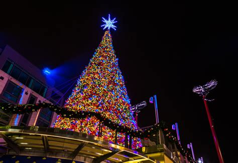 christmas tree lighting installed light installation houston 832 726 1669