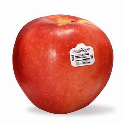Sweetango Apples Stemilt Apple Salad Recipes Snacking