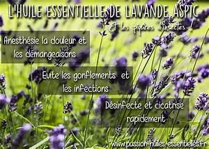 Lavande Anti Moustique : huiles essentielles pour soulager une piq re de moustique ~ Nature-et-papiers.com Idées de Décoration