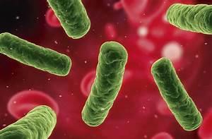 Salmonella Meditip