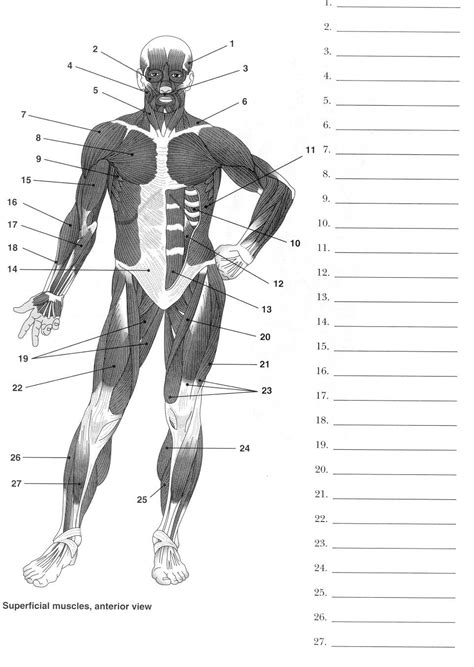 label muscles worksheet muscles