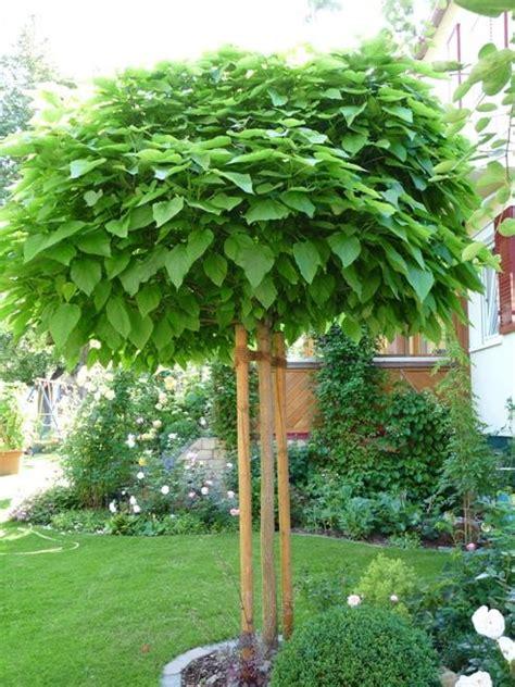 catalpa baum schneiden kugel trompetenbaum krone schneiden mein sch 246 ner garten forum