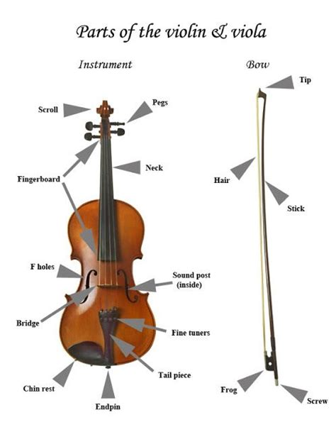 Diagram Of Violin Part by 40 Best Parts Of The Violin Images On Musical