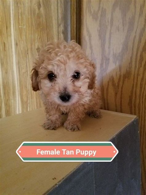 The most complete information about pet stores in denver, north carolina: Pet Stores In Denver That Sell Puppies - PetsWall