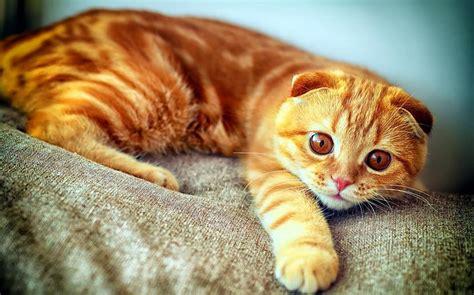 Rudi kaķi - Spoki