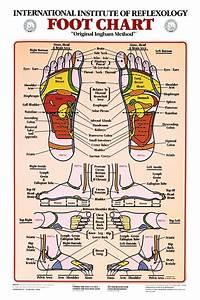 Foot Reflexology Anatomical Chart