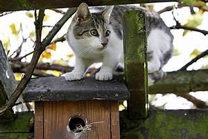 Nistkasten Für Blaumeisen : wo und wie h ngt ein nistkasten am besten kuriose tierwelt ~ Orissabook.com Haus und Dekorationen
