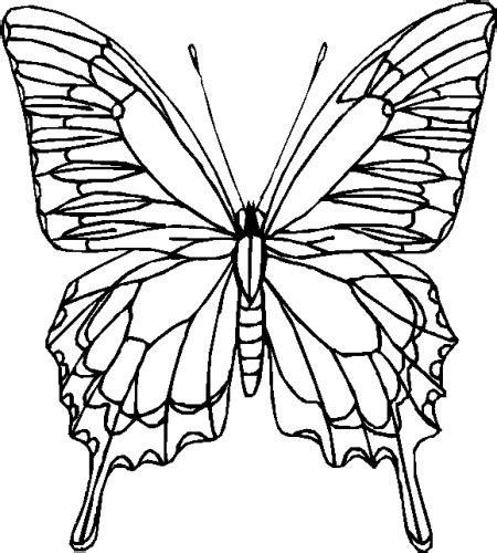 immagini colorate bellissime farfalle immagine da colorare n 28517 cartoni da colorare