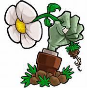 mentioned apps plants vs zombies popcap plants vs zombies hd popcap  Plants Vs Zombies Zombie Head Png