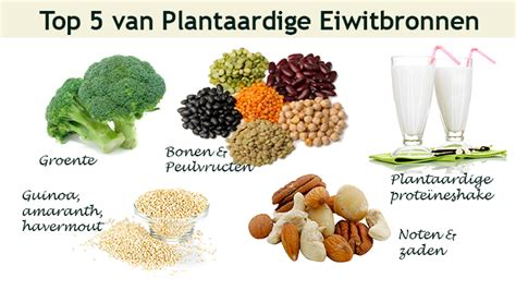 wat bevat veel eiwitten