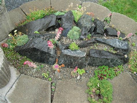 Rock Garden : Plants For Rock Gardens-gardening Know How