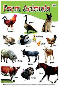 Farm Animals Chart