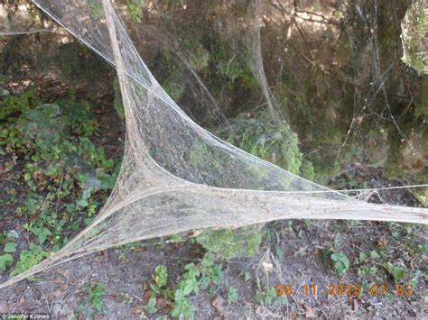 Thousands Of Rare Spiders Spin A Gigantic Web Through. Round Swivel Living Room Chair. Rooms To Go Leather. Tall Vase Decor. Ergonomic Living Room Chairs. Rooms For Rent Aurora Co. Home Decor Catalogs. Window Film Decorative. Elegant Party Decorations