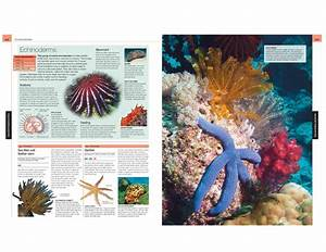 Ocean The Definitive Visual Guide