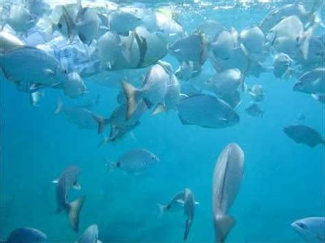 Glass Bottom Boat Tours Everglades by Snorkel Glassbottom Boat Tours With Sea Experience In Ft