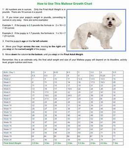 Maltese Growth Chart Petmaltese Com Puppy Growth Chart