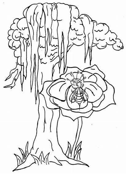 Coloring Pages Louisiana Swamp Alaska Miss Nelson