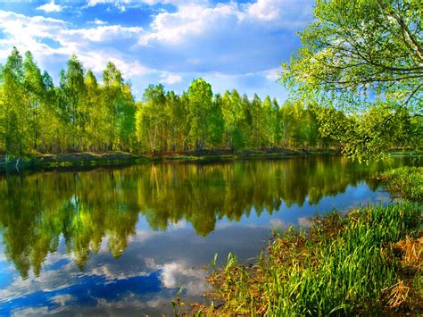 beautiful trees   river  wallpaperscom