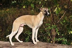 Hund Im Garten Vergraben : mr unglaublich infohund das umfassende fotoarchiv zum ~ Lizthompson.info Haus und Dekorationen
