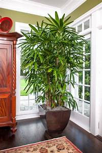 seven, houseplants, that, will, make, your, home, a, healthier, place, to, live