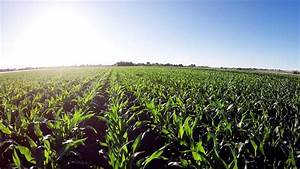 Aerial View Of Corn Field On Sunset Stock Footage Video ...