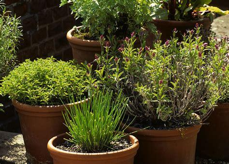 les erreurs 224 233 viter dans la culture des plantes aromatiques