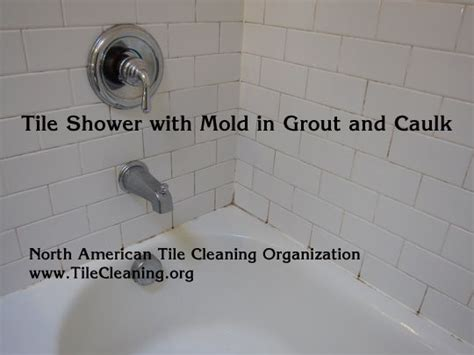 Best Way To Clean A Shower by Best 25 Clean Shower Grout Ideas On Clean