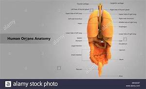 31 Label The Internal Anatomy Of The Heart