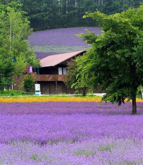Best 25 Furano Ideas On Pinterest Otaru Hakodate And