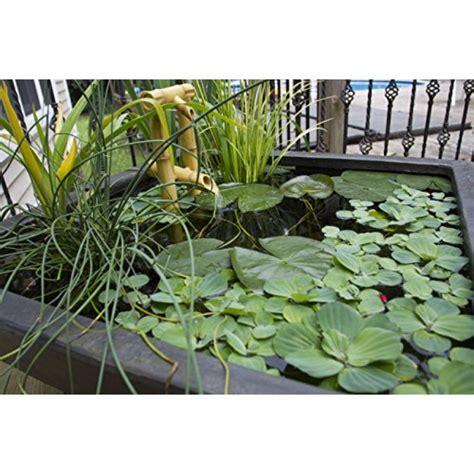 aquascape 78049 aquatic patio pond water garden 22 inch