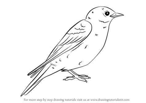 best 28 how to draw a bluebird how to paint a