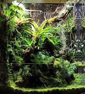 Pflanzen Terrarium Einrichten : pin von stefan auf paludarium terrarien terrarium pflanzen und regenwald terrarium ~ Watch28wear.com Haus und Dekorationen