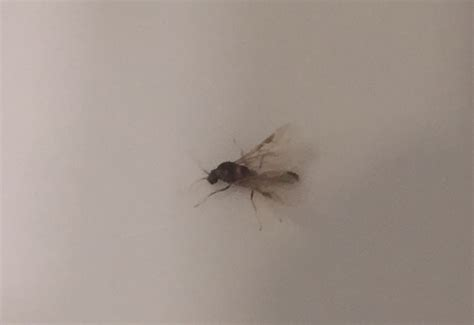 argentine ants swarming in los angeles what s that bug