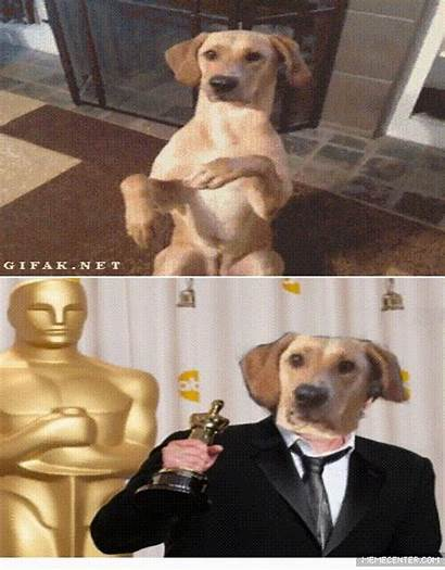 Acting Dog Leonardo Dicaprio Taught Feels Oscar