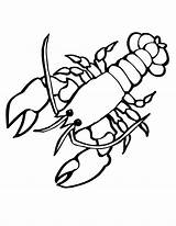 Lobster Coloring Sea Animals Drawing Crayfish Outline Cartoon Clasp Giant Creatures Crawfish Colouring Animal Clipart Silhouette Sheets Printable Colornimbus Clip sketch template