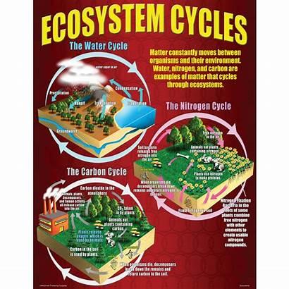 Poster Ecosystems 12th Grades 4th