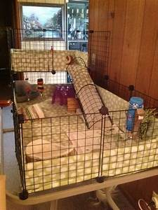 101 best hedgehog cage images on Pinterest | Hedgehogs ...