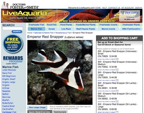 tankbuster snapper emperor juvenile pound room aquaria offered species internet future pounds kg inches grow cm